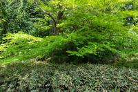 新緑と熊笹 - 彩りの軌跡