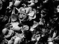 土に返る - 節操のない写真館