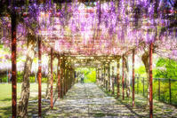 ☆ 春の通路 ☆ - Trimming