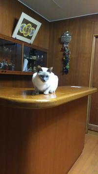 私達の一昨日の夕食会 - MINKWIN Cattery &Pretty Aki