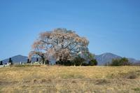 富士見町・原村の桜 - オーナーズブログ・八ケ岳南麓は晴れています!