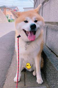 口うるさいオトコ達 - 犬との穏やかな日々