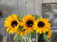 ヒマワリさんさん(o^^o) - ブレスガーデン Breath Garden 大阪・泉南のお花屋さんです。バルーンもはじめました。