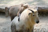活発で勇敢なナズナ - 動物園に嵌り中