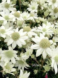 やって見ると案外 - Miwaの優しく楽しく☆