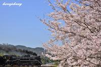 デゴイチ桜 - 蒸気をおいかけて・・・少年のように