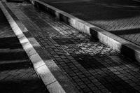 寒がる水路の濡れ落ち葉を慰める早春の光蜥蜴 - Silver Oblivion