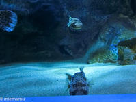 ハリセンボン~3月のおたる水族館にて - My favorite ~Diary 3~