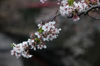 2018年の桜 ~目黒川編~ - NINE'S EDITION