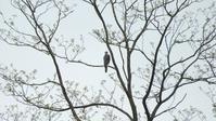 4/14 野川公園 - 山と鳥を愛するアナパパ