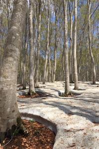 ブナの森 - 松之山の四季2