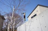 春本番 庭の樹木剪定 - 函館の建築家 『北崎 賢』日々の遊びと仕事
