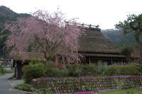 なごり桜美山かやぶきの里 - 京都ときどき沖縄ところにより気まぐれ