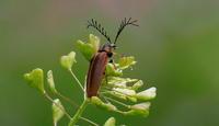 晩春その1 - 紀州里山の蝶たち