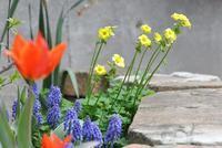 庭の花とタート - AR75TS