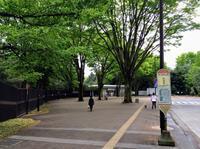 神代植物公園に来てます。ケヤキが立派。 - 設計事務所 arkilab