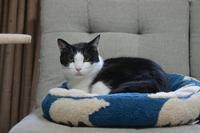 お気に入りのベッド・Part5 - Black Cat Moan