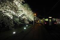 分水駅の桜 - きかんしゃとしゃしんき