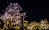 2018桜~東寺ライトアップ - 鏡花水月