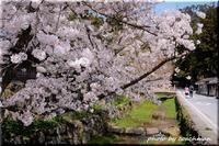 山陰山陽、桜の旅(3) - 北海道photo一撮り旅