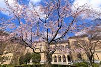 桜咲く京都2018 京都府庁旧本館のしだれ桜 - 花景色-K.W.C. PhotoBlog