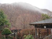 614、春がきた!春の雨 - 五十嵐靖之 趣味の写真と短歌