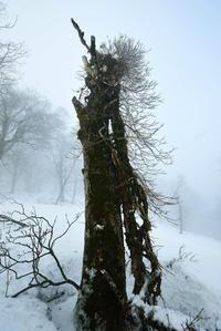 孤高の樹 - 源爺の写真館