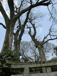 奈良県葛城山麓の道 - 自然の写真帖