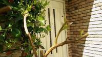 木の生命力にビックリ - ゆうゆう素敵な暮らしの手帖