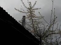 窯場にすももの花咲く - 冬青窯八ヶ岳便り