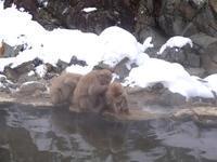 温泉に入ると、ストレスが軽減し、妊娠率も高まる - 昭和薬局ブログ