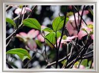 ☆花に囲まれて - ニットルームpiko
