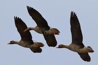 何度見ても感動しますね ^^ - 北の大地で野鳥ときどきフライフィッシング