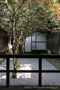 京都花紀行  椿の寺法然院② 2018 - 暮らしを紡ぐ