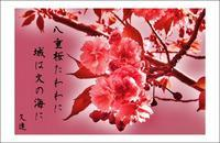八重桜(やえざくら):俳句 - always over the moon