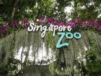 2018シンガポール&沖縄の旅(2)セントーサ島とシンガポール動物園 - 十勝・中札内村「森の中の日記」~café&宿カンタベリー~