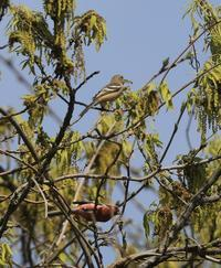AK公園の野鳥色々 - 菜奈ちゃんコーナー