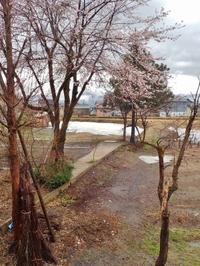 兼業農家の消雪日は4月16日 - 浦佐地域づくり協議会のブログ
