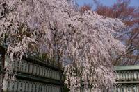 大石神社 - Deep Season