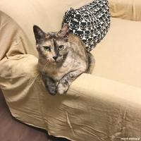 きゅっとしてるキューちゃん - 賃貸ネコ暮らし|賃貸住宅でネコを室内飼いする工夫