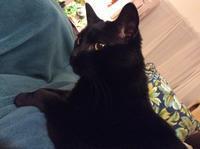 ネコ : お花畑 - にゃんこと暮らす・アメリカ・アパート(その2)