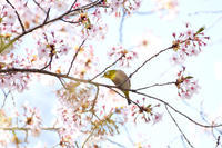 野鳥観察レポート0416 - 花鳥風月…空Photo blog