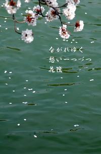 京都さくらよさこい2 - 螺子花便り