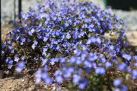 アーチ周りの様子 - my small garden~sugar plum~