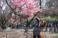 桜の開花状況@ブルックリンボタニックガーデン - 安部かすみの《ニューヨーク直行便 》 Since 2005