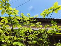 若葉の季節 - アオモジノキモチ