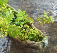 山椒の花と花山椒… - 侘助つれづれ