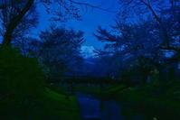 忍野、お宮橋の桜 - 風とこだま