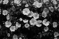 white flowers - S w a m p y D o g - my laidback life