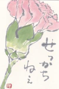 カーネーション「せっかちねぇ」 - ムッチャンの絵手紙日記